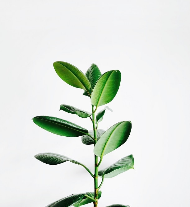 More green tree will more healthy